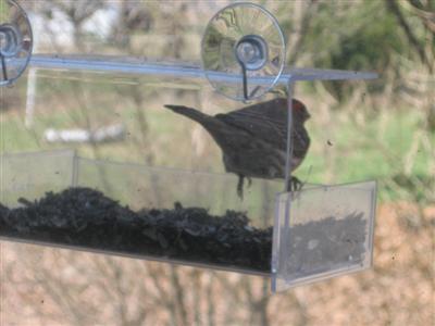 birdfeeder-custom.JPG